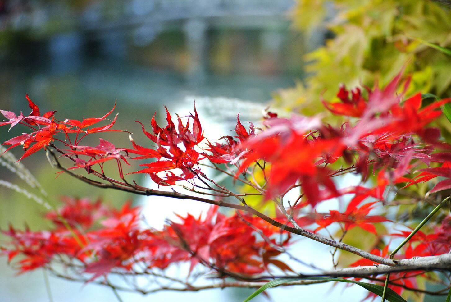 永観堂と赤い紅葉の写真