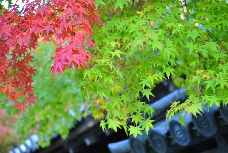 永観堂と南禅寺の紅葉の写真