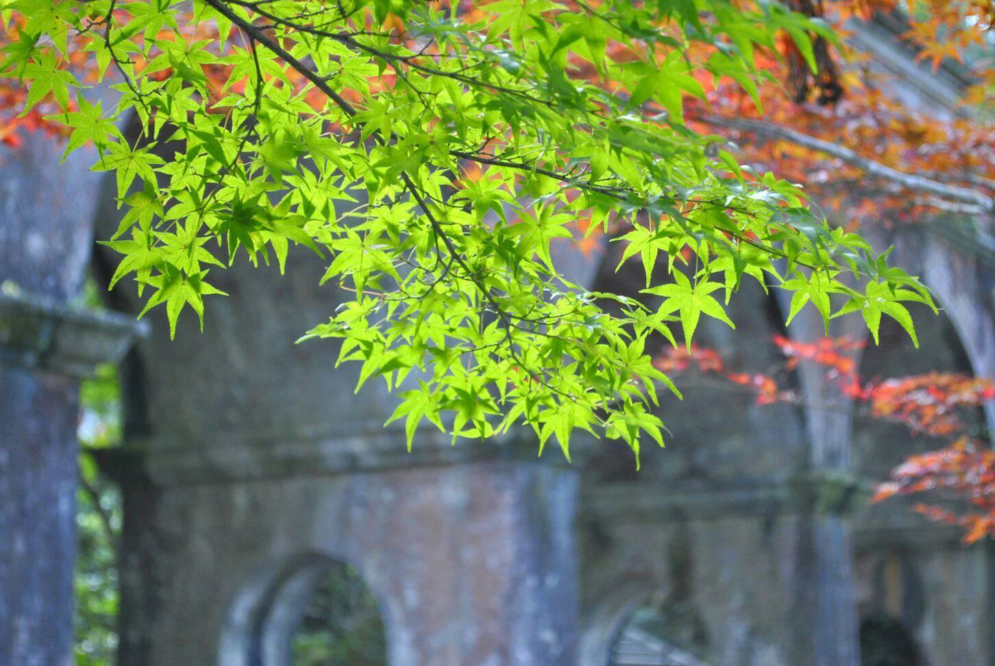南禅寺の水路閣と紅葉の写真