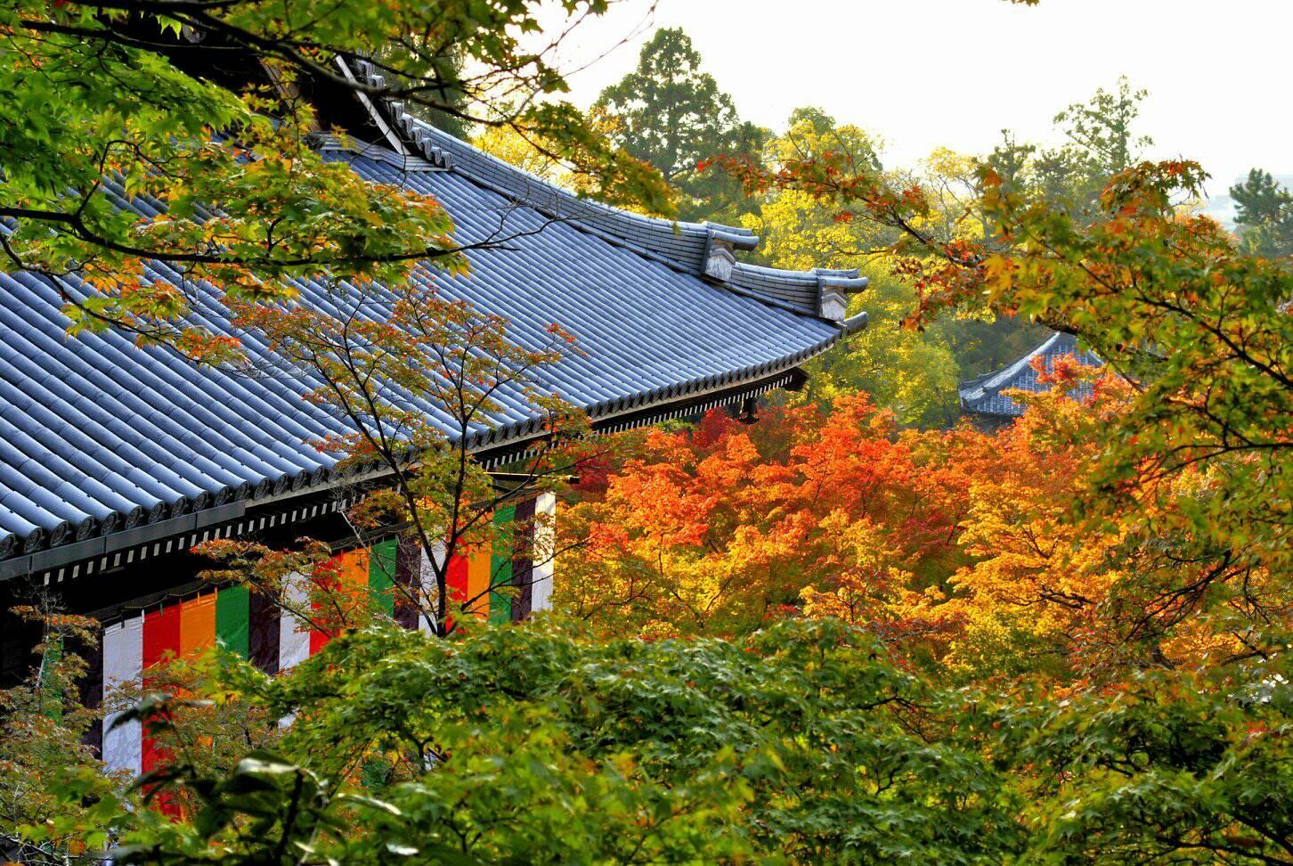 紅葉の永観堂の写真