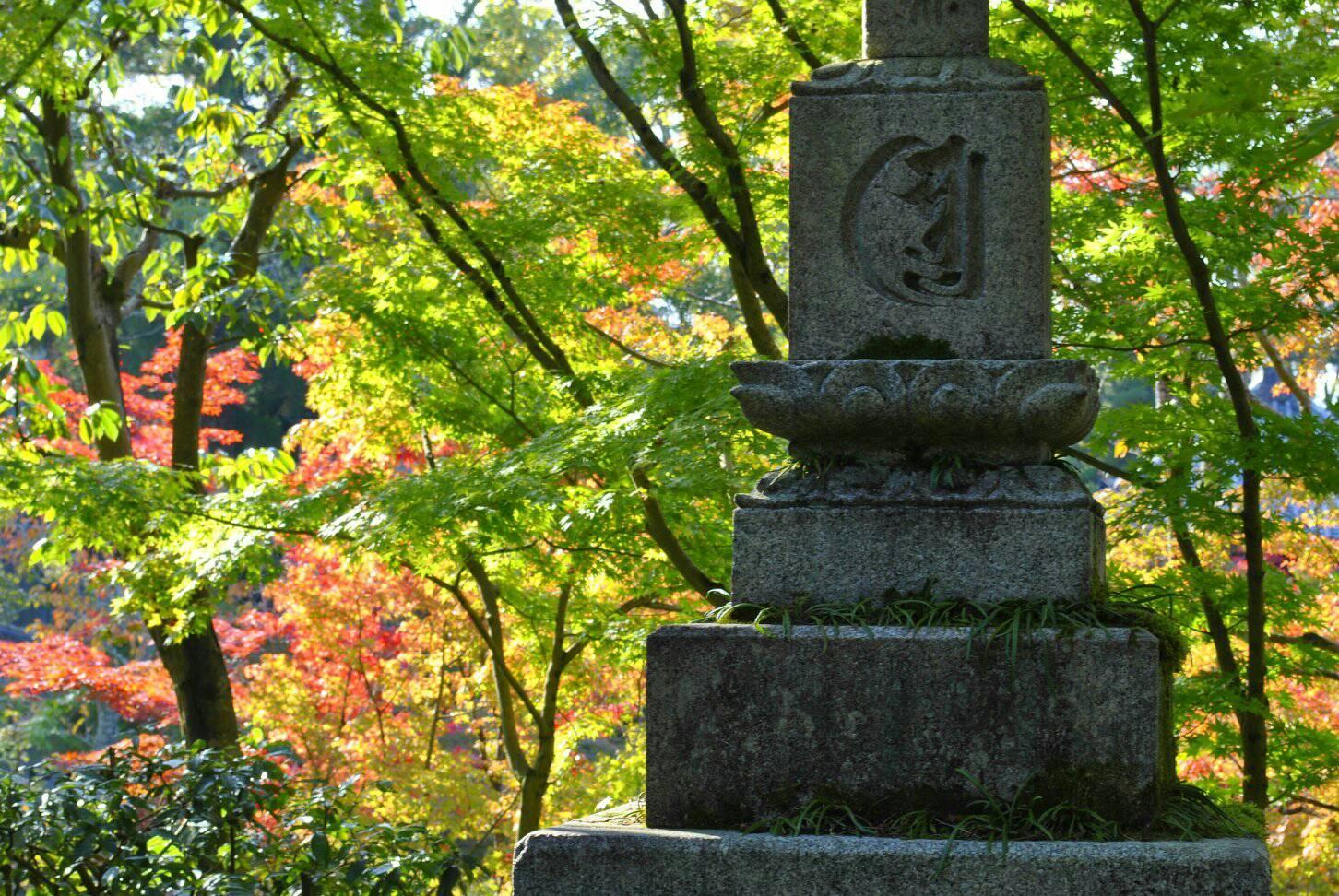 禅林寺の紅葉の写真
