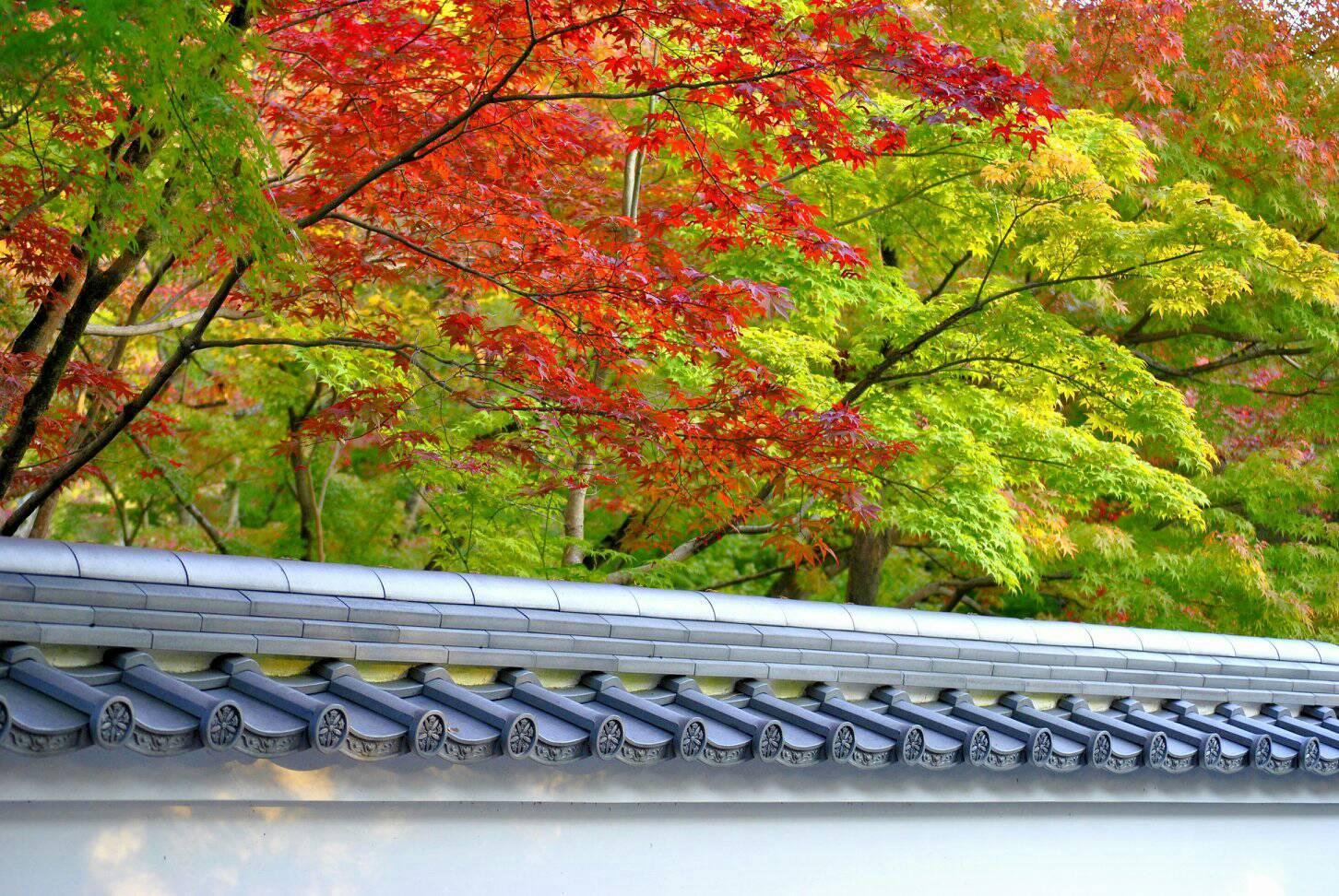 京都の綺麗な紅葉の写真