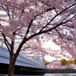 2018桜の写真、大阪市