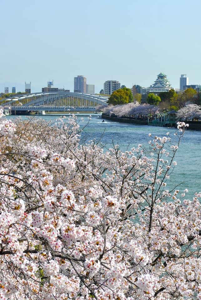 源八端から見る大阪城と桜 都島区