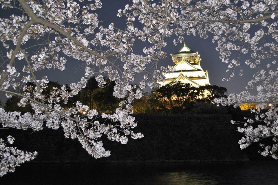 夜桜の大阪城の写真