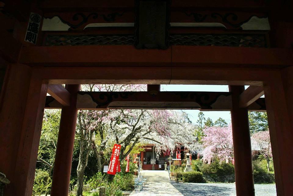 勝利寺の桜 九度山町