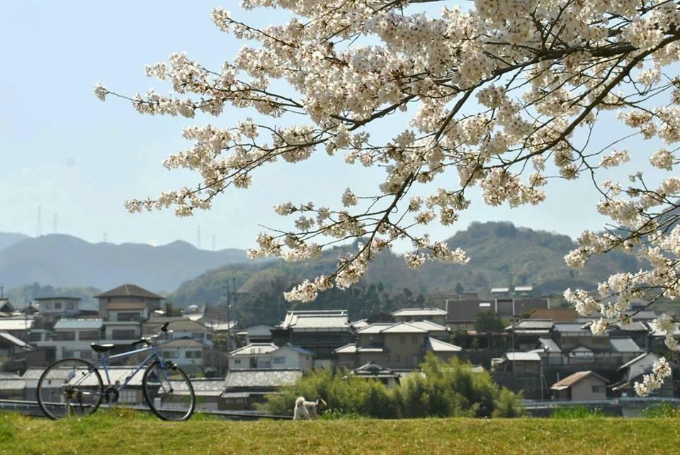 自転車と犬と桜の写真