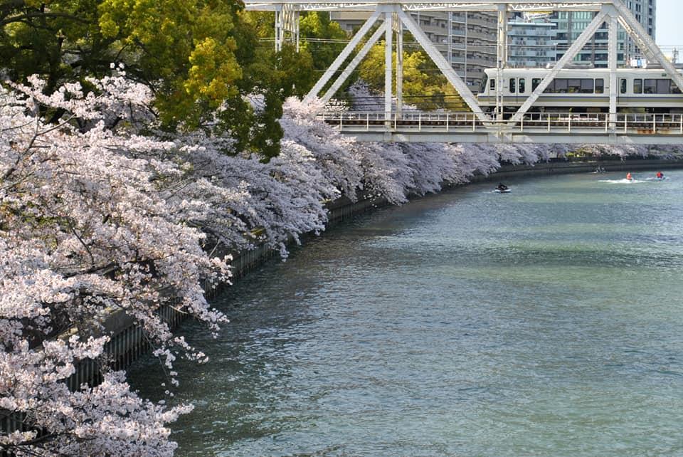 源八橋からみる桜と電車の写真