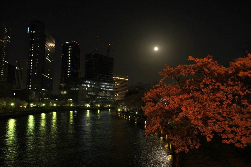 ビルと満月と桜の写真