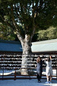 橿原神宮前 おみくじ 御神籤の写真 Photo