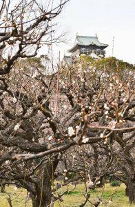 大阪城の梅林と難波宮跡公園