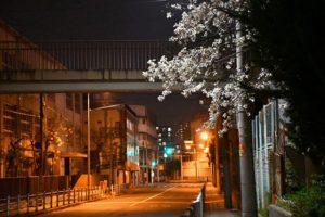 難波中公園の桜 さくら 写真